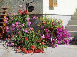 Blumenfreuden_Gaestehaus-Tritscher
